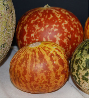 Tigger melon